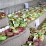 National Apple Festival