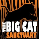 Big Cat Sanctuary Open Days 2016