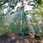 Halloween Forest Family Day at Hunstead Wood – 27th October