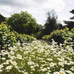 Spring Fair at Belmont House and Gardens – Monday 7th May 2018