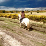 Winter Pony Fun Group Sessions! at Little Forest Ponies – Sunday 20th January 2019